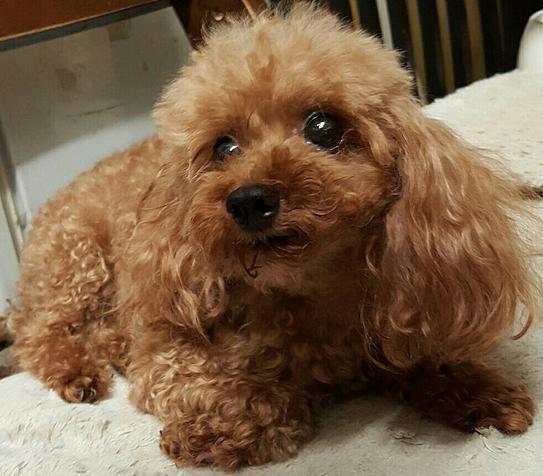 大阪府の犬の里親募集情報 | ANIMAL LOVER
